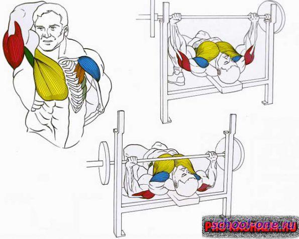 Мышцы, задействованные при